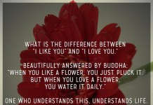 "What is the difference between ""i like you"" and ""i love you."" beautifully answered by Buddha: ""when you like a flower, you just pluck it. but when you love a flower, you water it daily."" one who understands this, understands life."