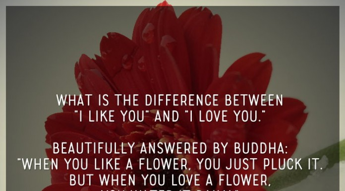"""What is the difference between """"i like you"""" and """"i love you."""" beautifully answered by Buddha: """"when you like a flower, you just pluck it. but when you love a flower, you water it daily."""" one who understands this, understands life."""