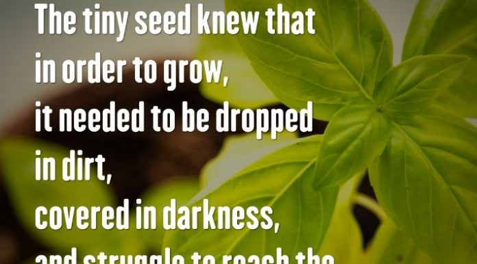 The tiny seed knew that in order to grow, it needed to be dropped in dirt, covered in darkness, and struggle to reach the light. - Sandra Kring